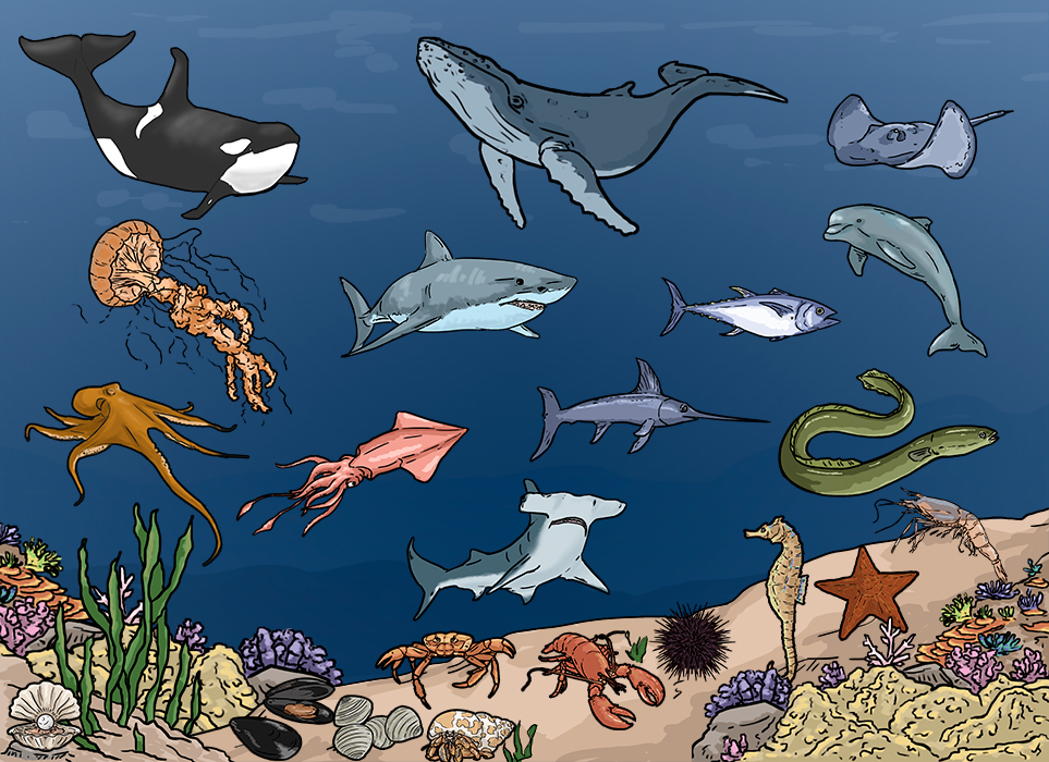 aquatic animales vocabulary